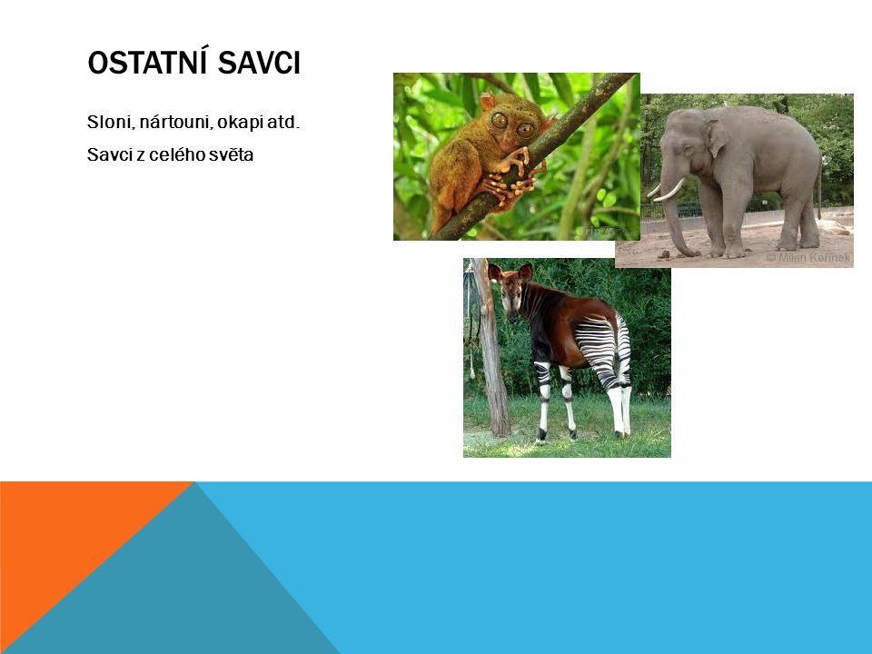 Ostatní savci Sloni, nártouni, okapi atd. Savci z celého světa
