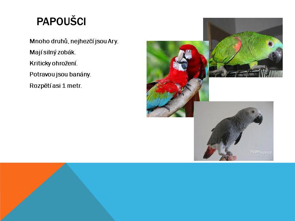 papoušci Mnoho druhů, nejhezčí jsou Ary. Mají silný zobák.