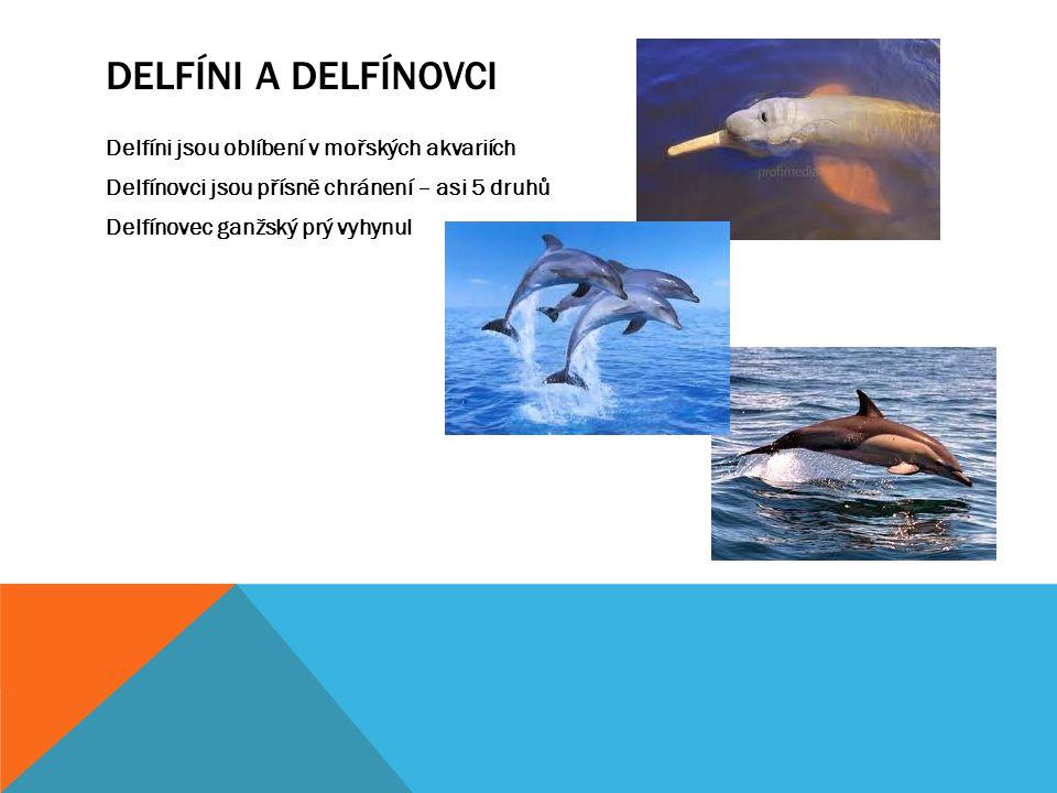 Delfíni a delfínovci Delfíni jsou oblíbení v mořských akvariích Delfínovci jsou přísně chránení – asi 5 druhů Delfínovec ganžský prý vyhynul