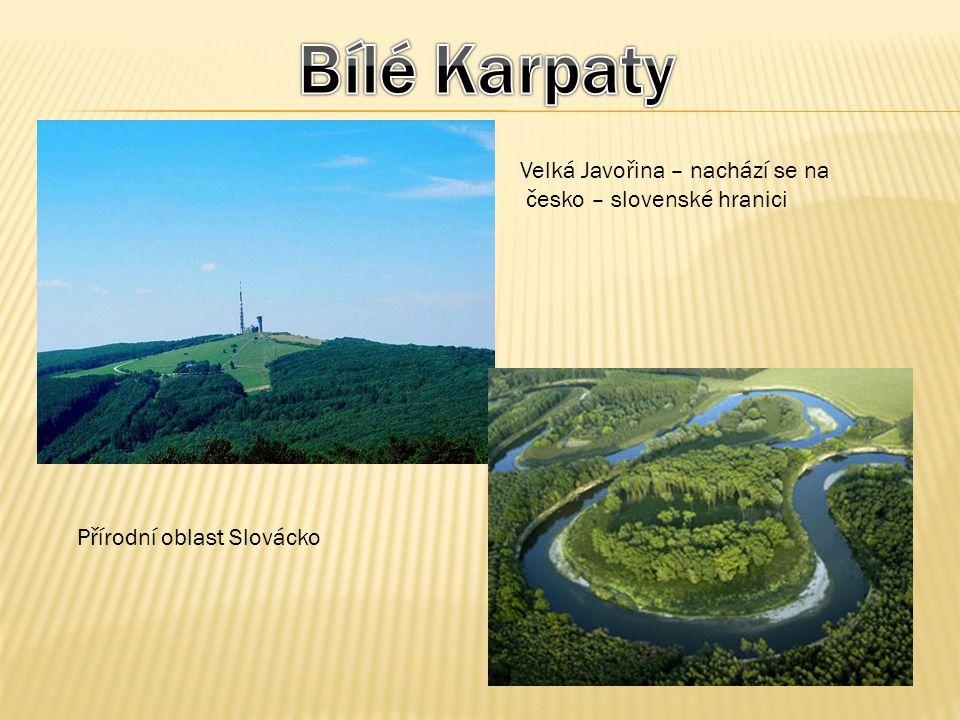 Bílé Karpaty Velká Javořina – nachází se na česko – slovenské hranici