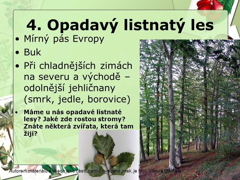 4. Opadavý listnatý les Mírný pás Evropy Buk