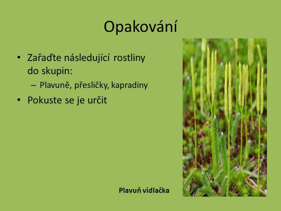 Opakování Zařaďte následující rostliny do skupin: Pokuste se je určit