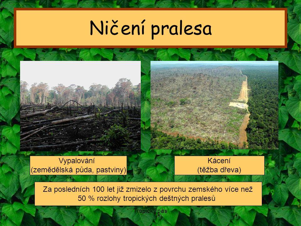 Ničení pralesa Vypalování (zemědělská půda, pastviny) Kácení