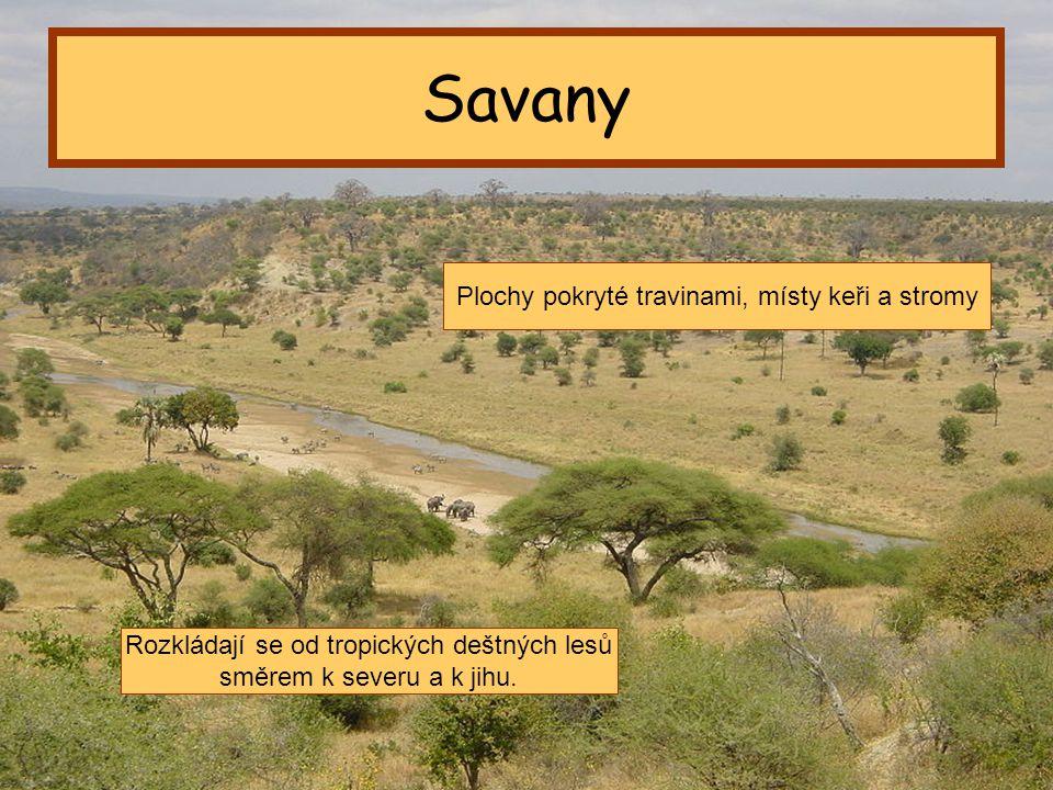 Savany Plochy pokryté travinami, místy keři a stromy