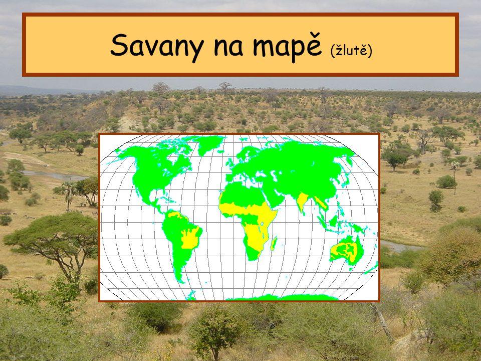 Savany na mapě (žlutě) Tropický pás