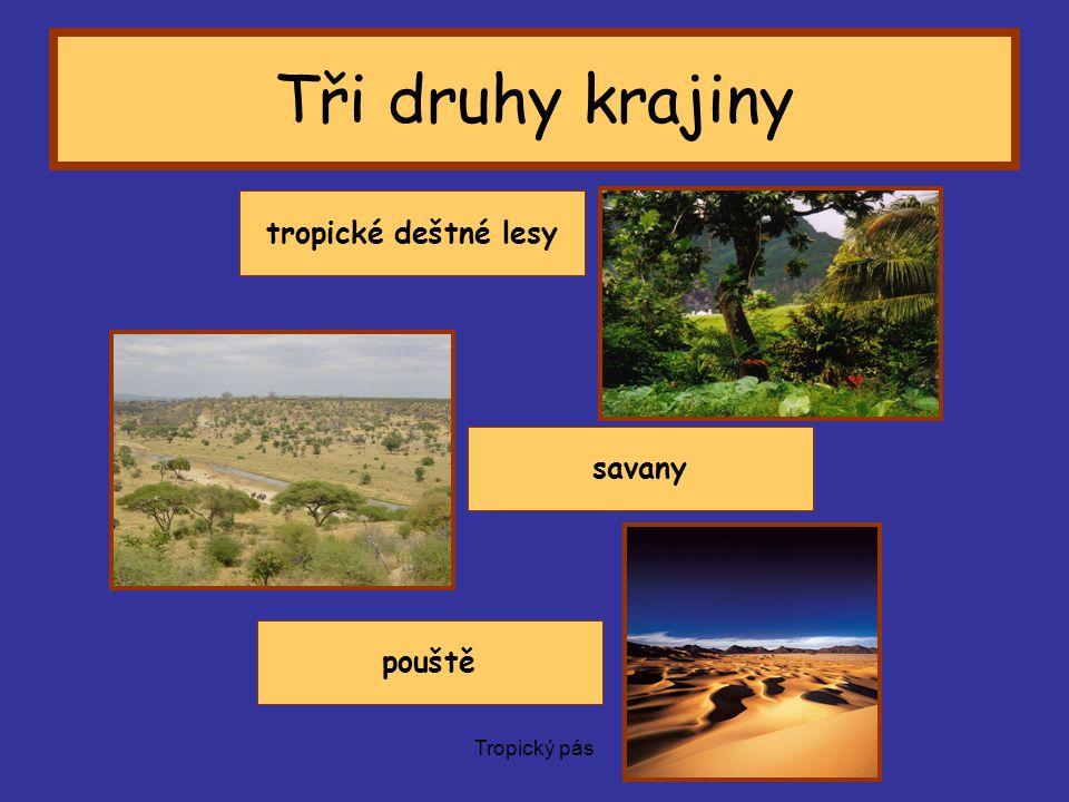 Tři druhy krajiny tropické deštné lesy savany á pouště Tropický pás