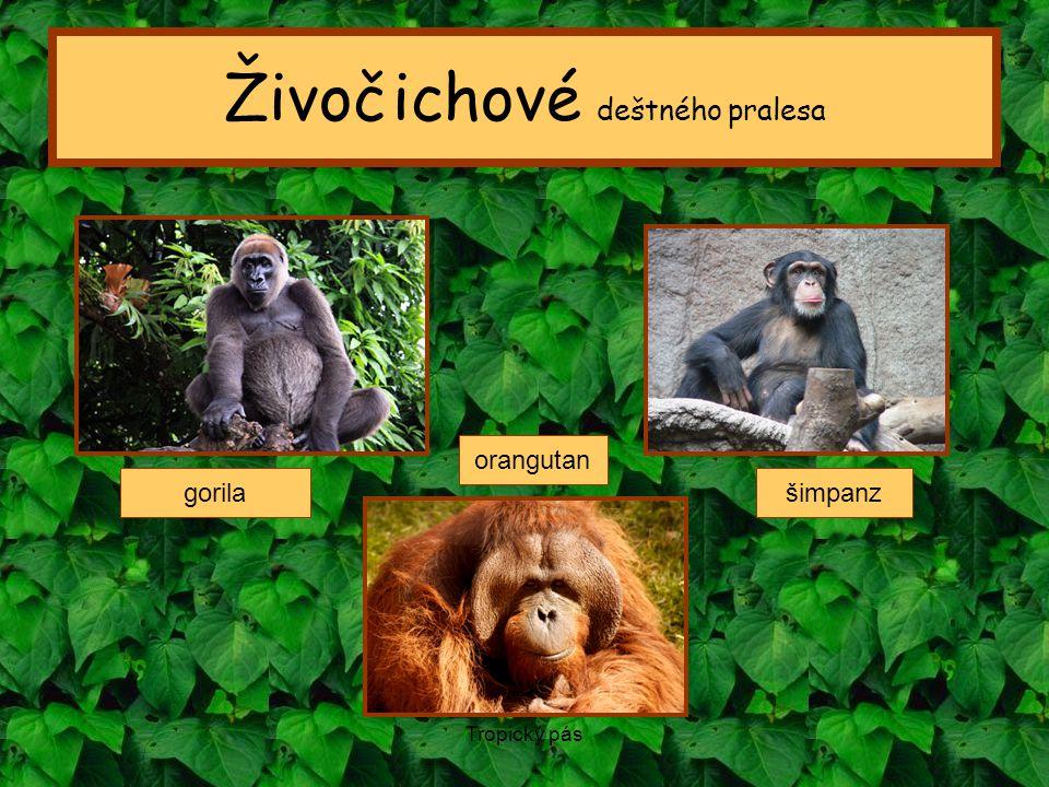 Živočichové deštného pralesa