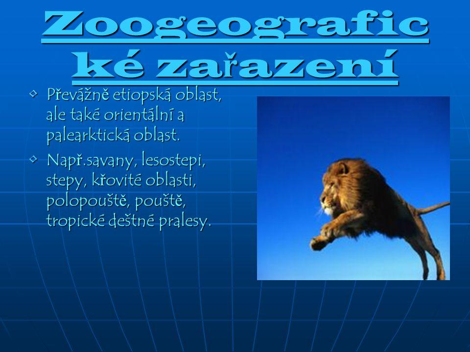 Zoogeografické zařazení