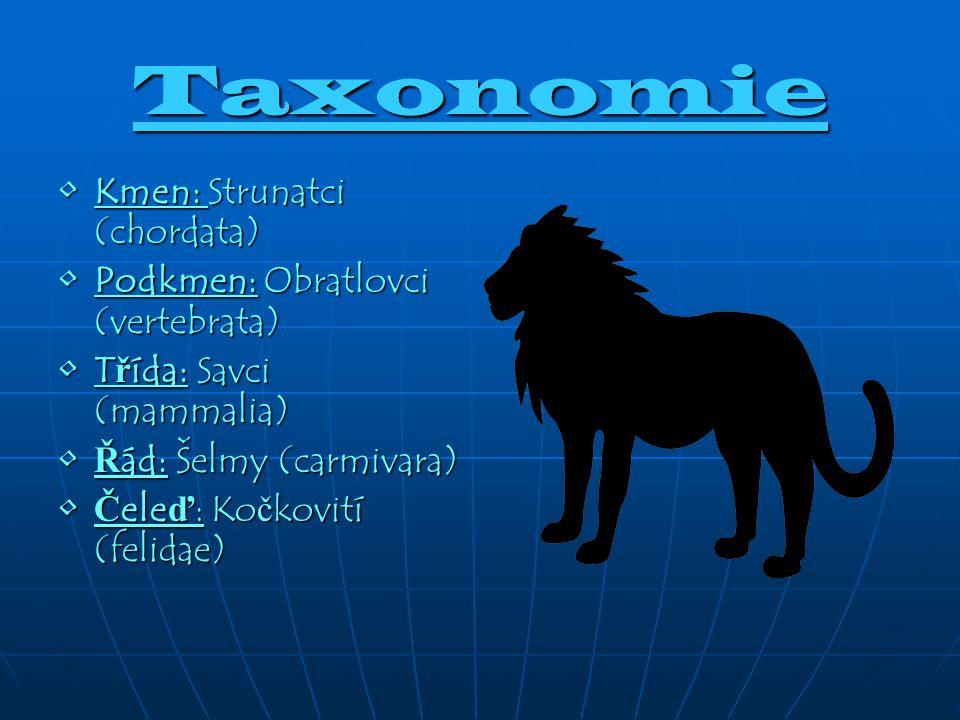 Taxonomie Kmen: Strunatci (chordata) Podkmen: Obratlovci (vertebrata)