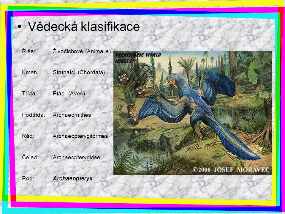 Vědecká klasifikace Říše: Živočichové (Animalia) Kmen: