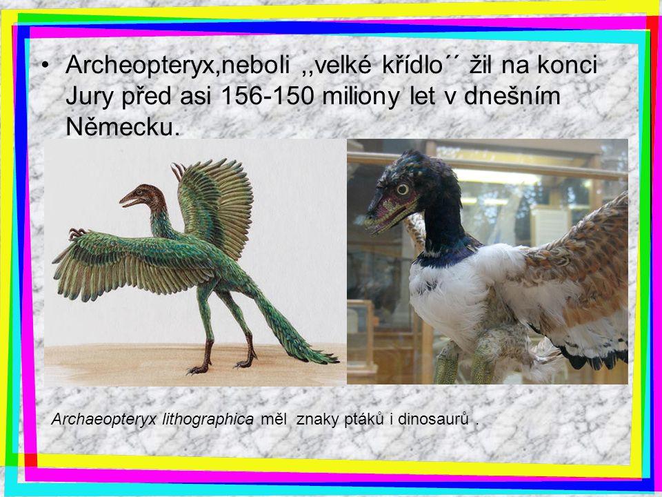 Archeopteryx,neboli ,,velké křídlo´´ žil na konci Jury před asi 156-150 miliony let v dnešním Německu.