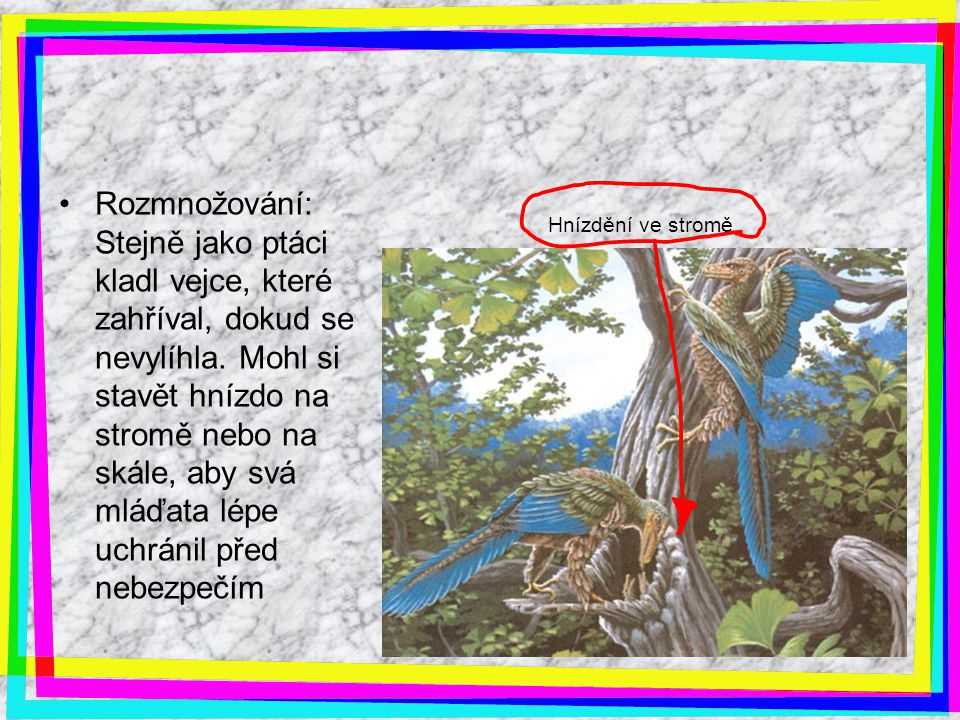 Hnízdění ve stromě