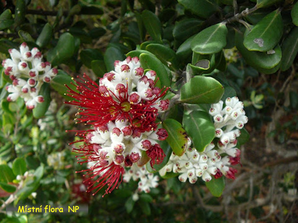 Místní flora NP