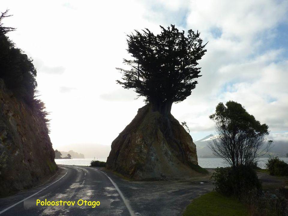 Poloostrov Otago