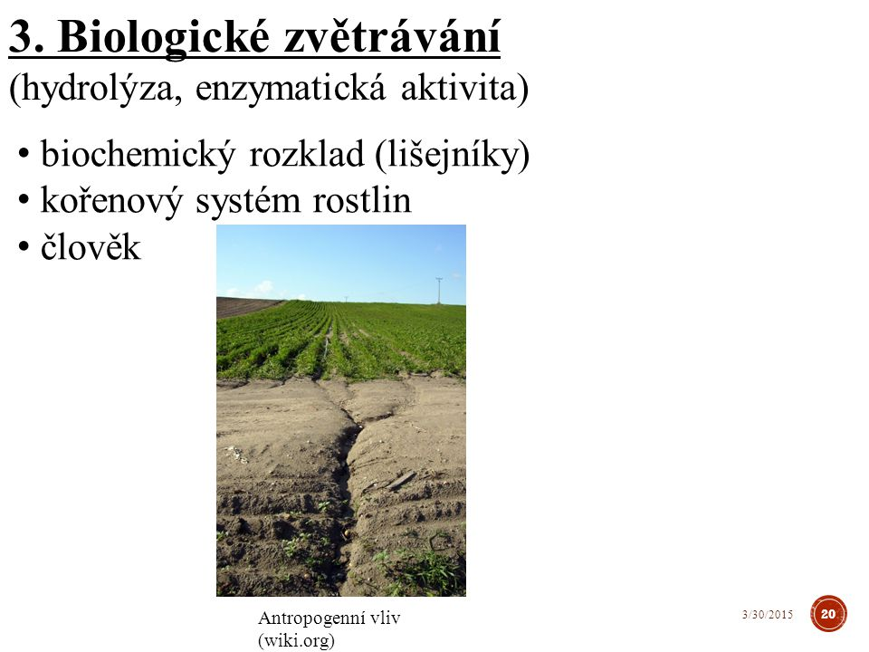 3. Biologické zvětrávání