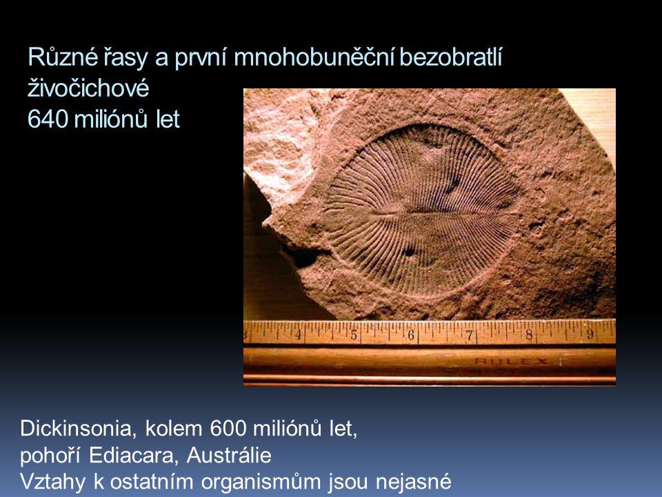 Různé řasy a první mnohobuněční bezobratlí živočichové 640 miliónů let