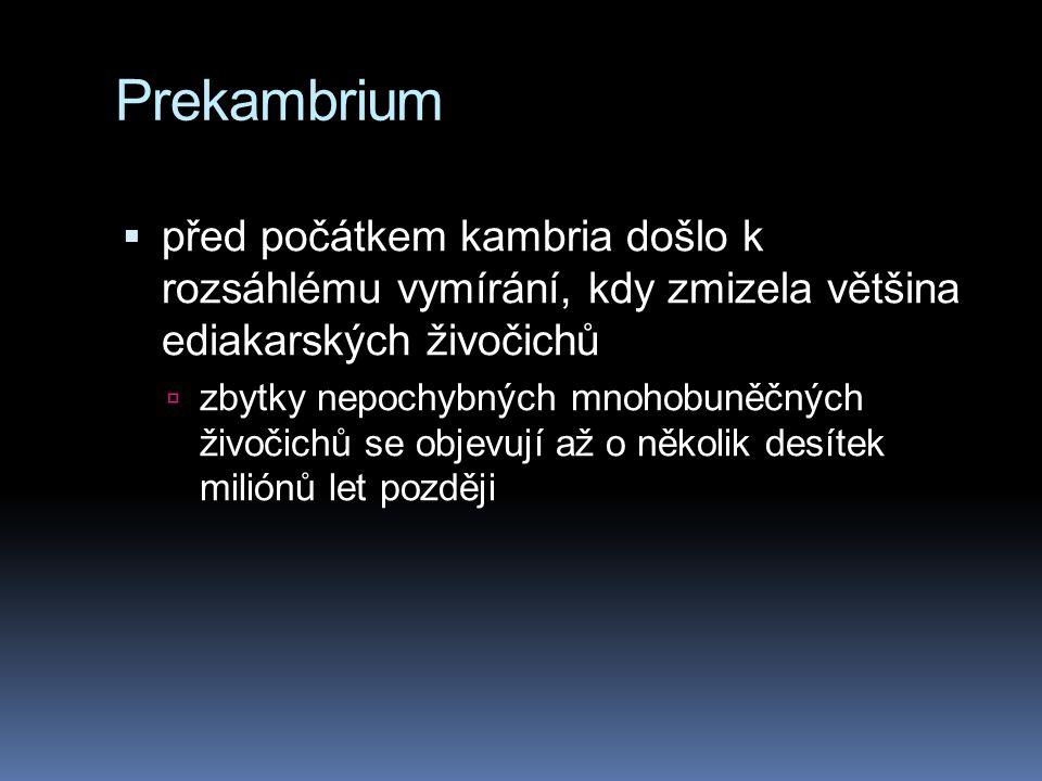 Prekambrium před počátkem kambria došlo k rozsáhlému vymírání, kdy zmizela většina ediakarských živočichů.