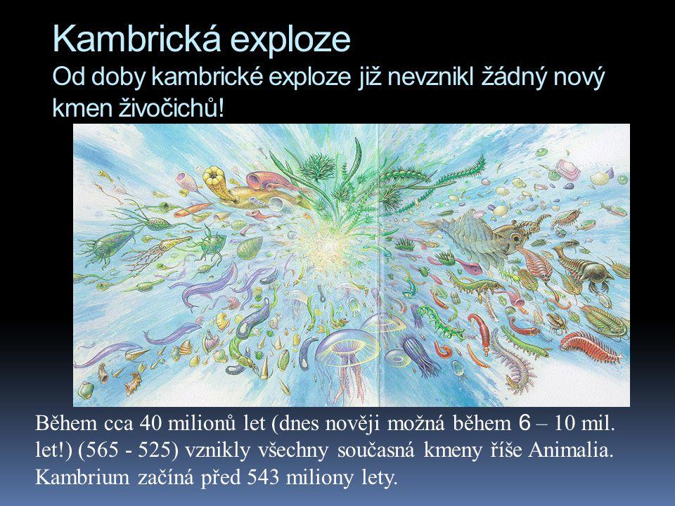 Kambrická exploze Od doby kambrické exploze již nevznikl žádný nový kmen živočichů!
