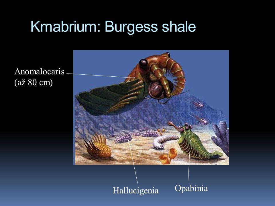 Kmabrium: Burgess shale