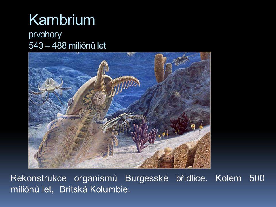Kambrium prvohory 543 – 488 miliónů let