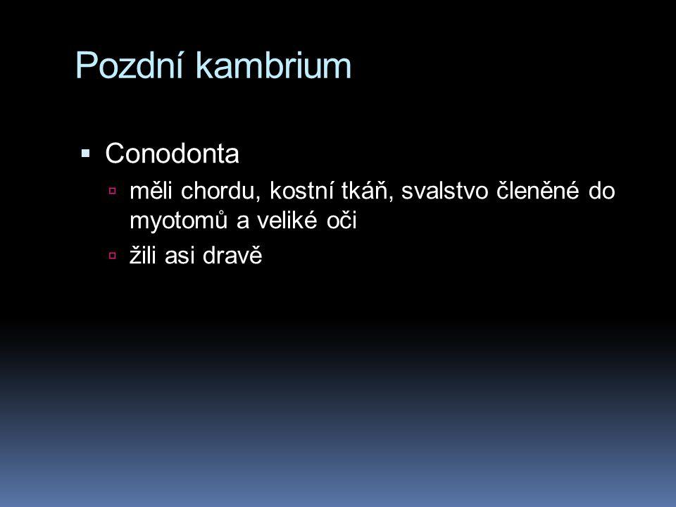 Pozdní kambrium Conodonta