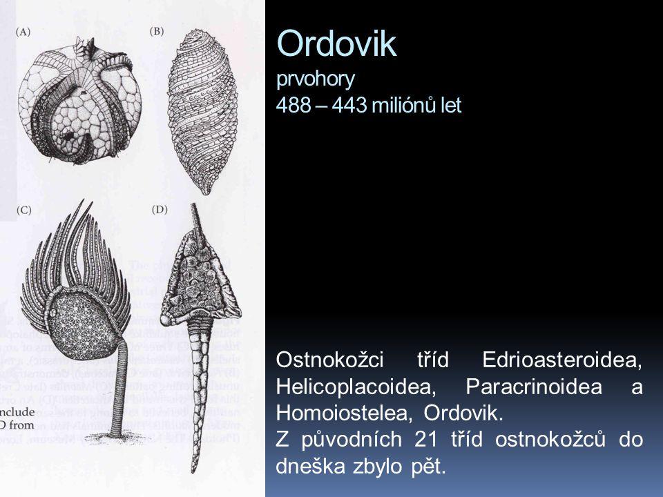 Ordovik prvohory 488 – 443 miliónů let