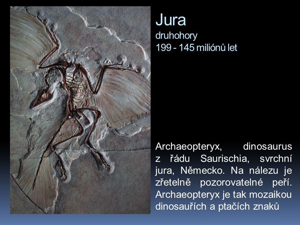 Jura druhohory 199 - 145 miliónů let