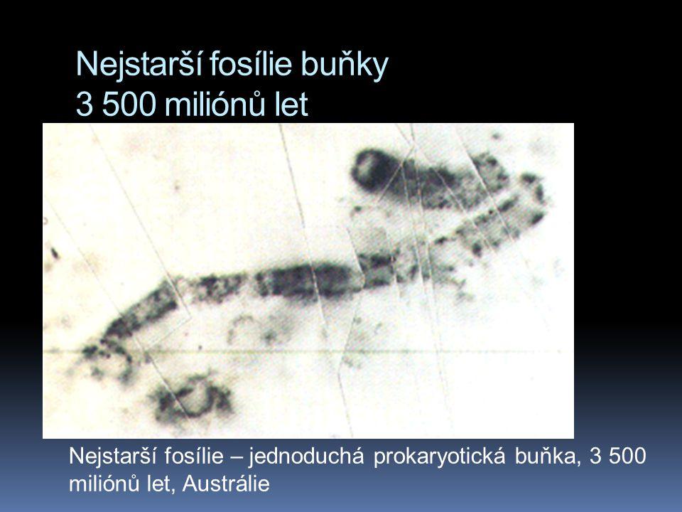Nejstarší fosílie buňky 3 500 miliónů let