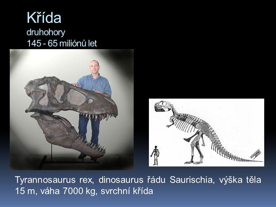 Křída druhohory 145 - 65 miliónů let