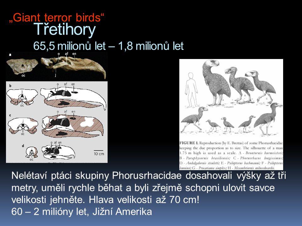 Třetihory 65,5 milionů let – 1,8 milionů let