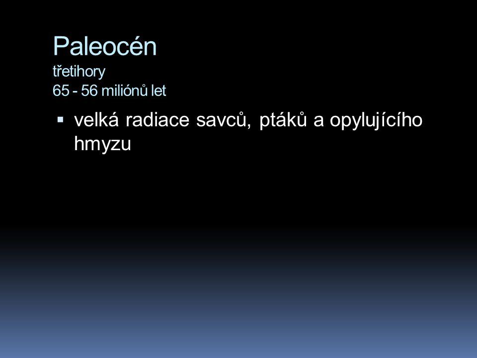 Paleocén třetihory 65 - 56 miliónů let