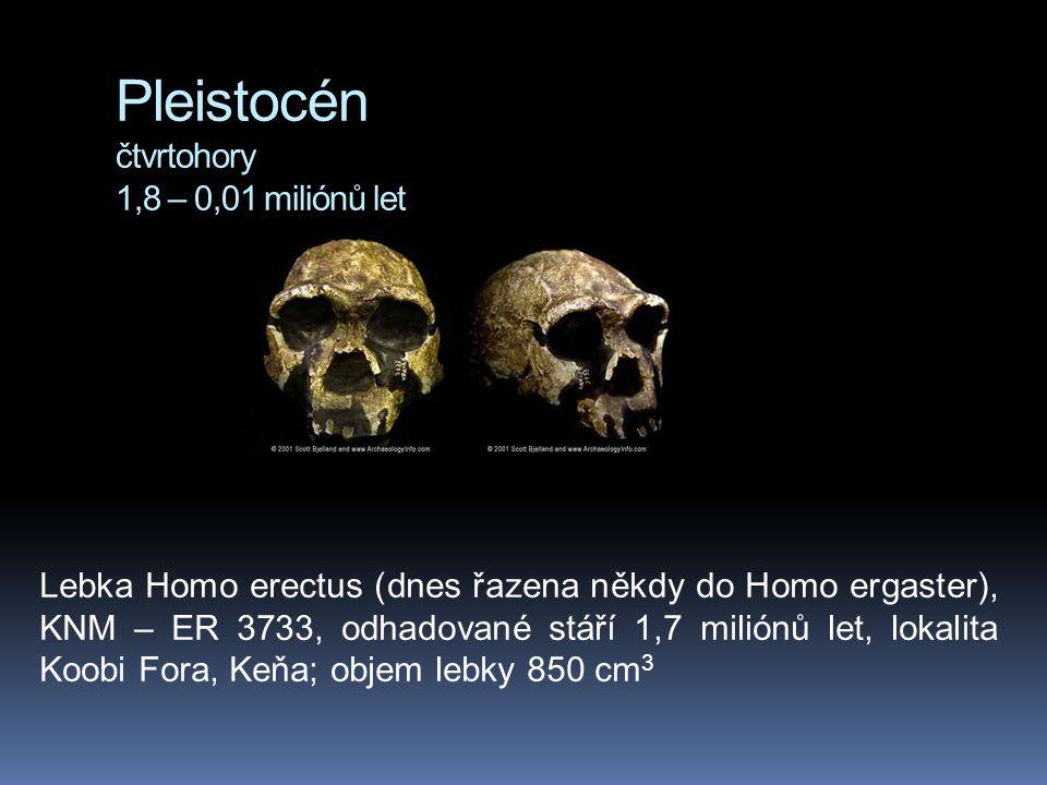 Pleistocén čtvrtohory 1,8 – 0,01 miliónů let