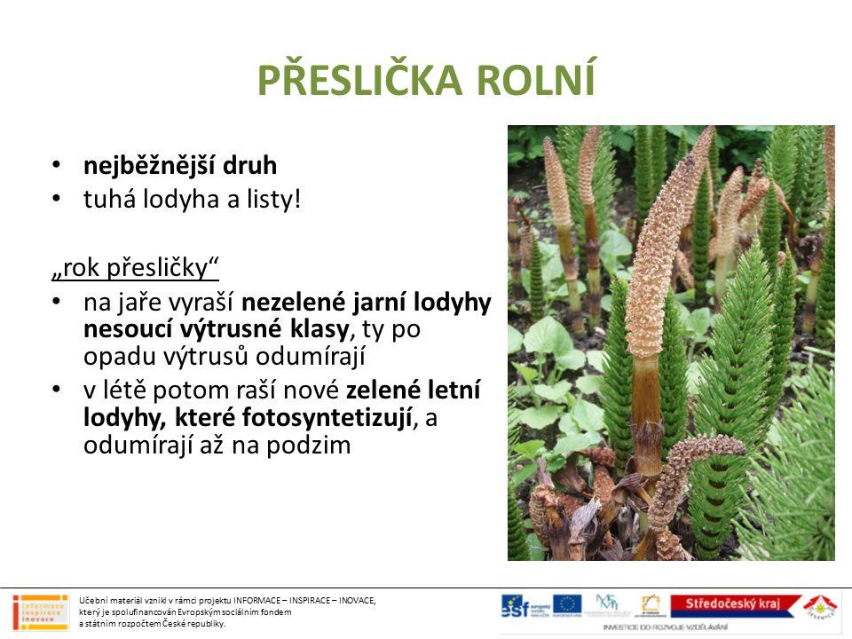 """PŘESLIČKA ROLNÍ nejběžnější druh tuhá lodyha a listy! """"rok přesličky"""