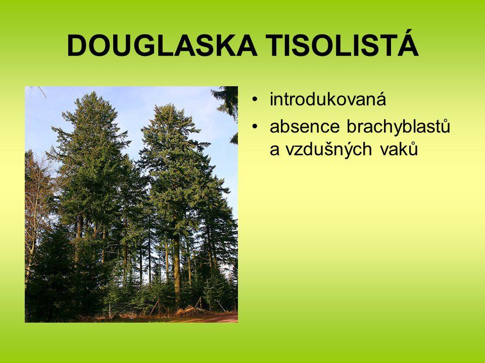 DOUGLASKA TISOLISTÁ introdukovaná