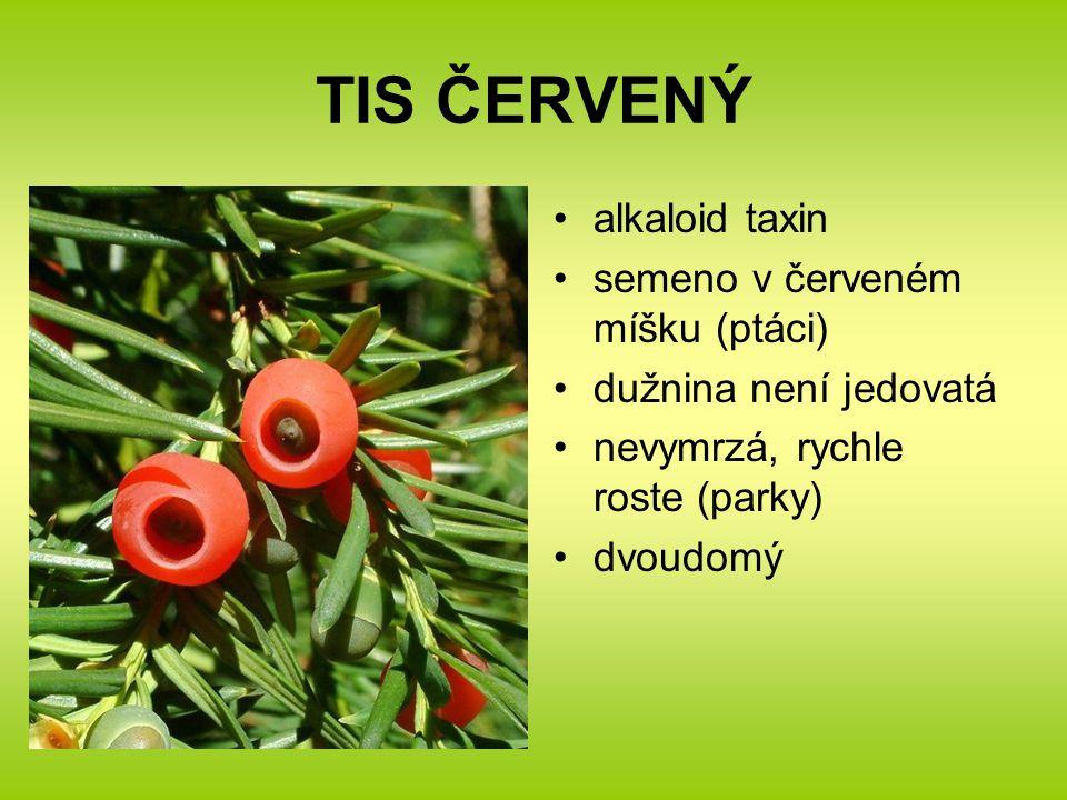 TIS ČERVENÝ alkaloid taxin semeno v červeném míšku (ptáci)