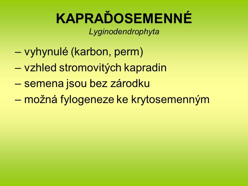 KAPRAĎOSEMENNÉ Lyginodendrophyta