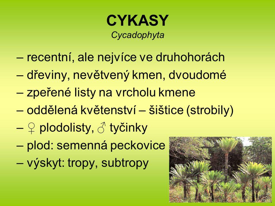 CYKASY Cycadophyta recentní, ale nejvíce ve druhohorách