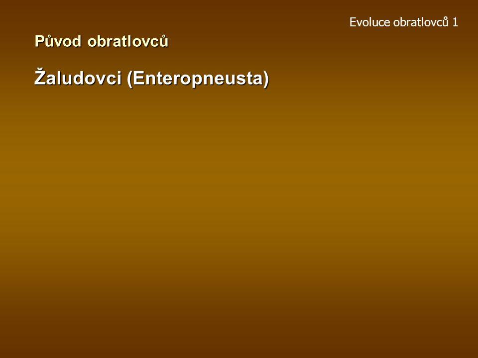 Žaludovci (Enteropneusta)