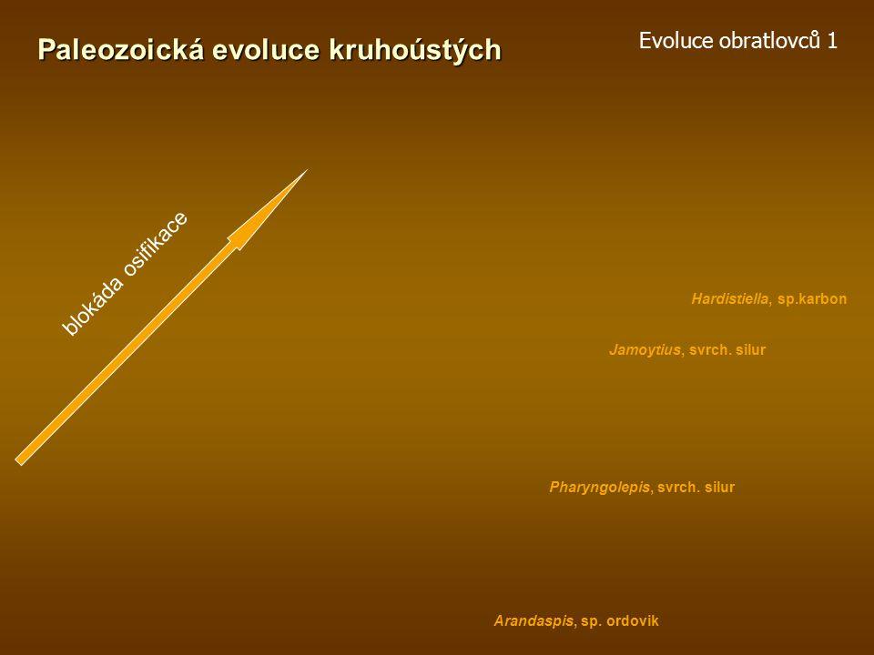 Paleozoická evoluce kruhoústých