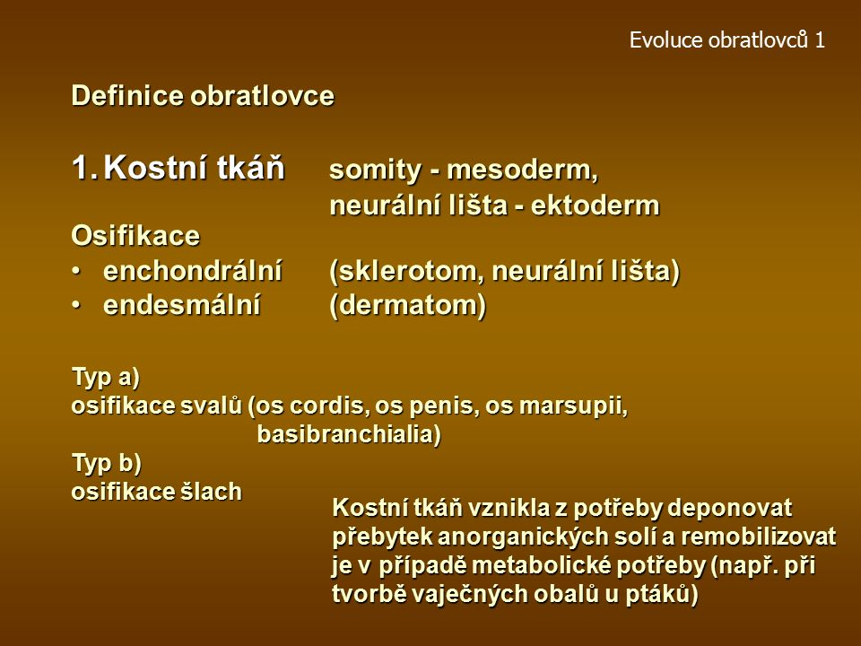 Kostní tkáň somity - mesoderm,