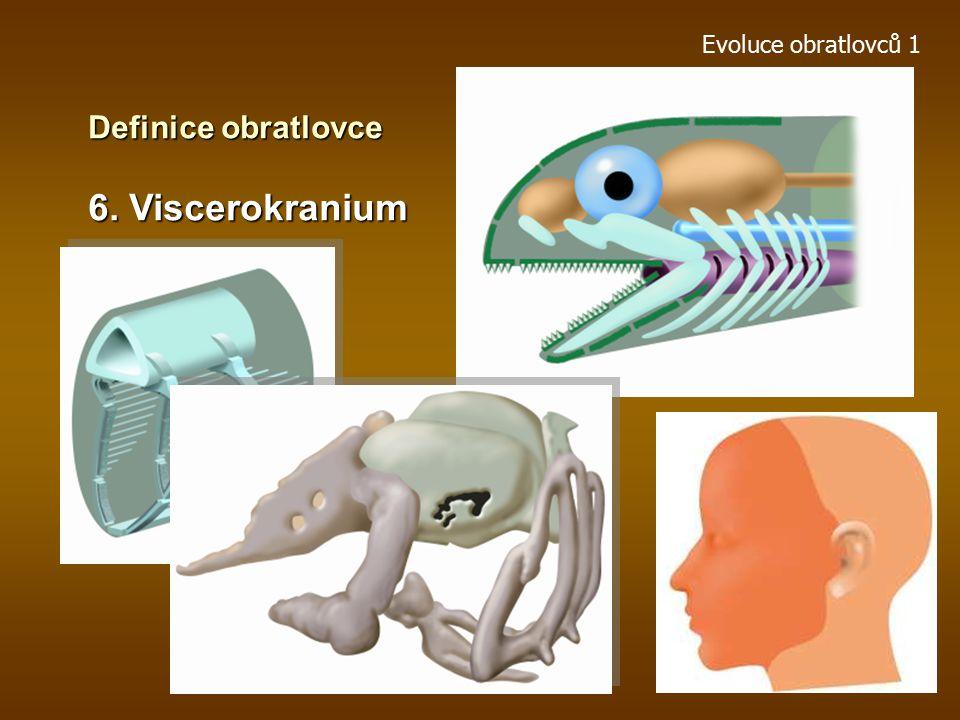 Evoluce obratlovců 1 Definice obratlovce 6. Viscerokranium