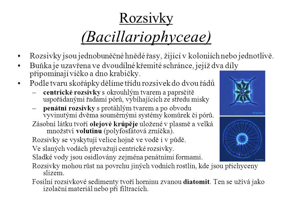Rozsivky (Bacillariophyceae)