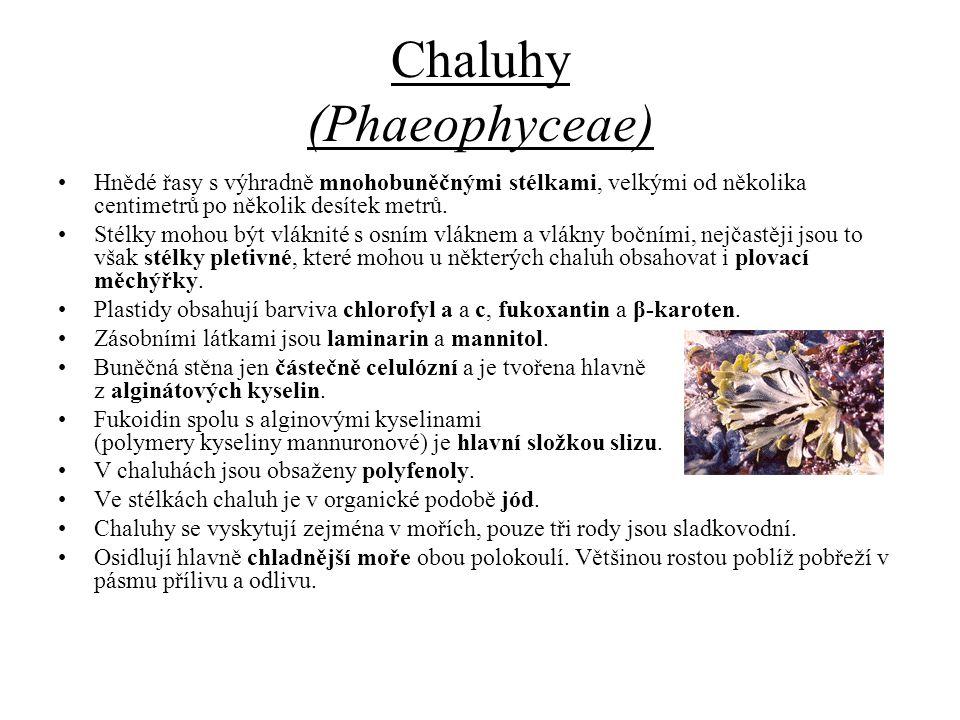Chaluhy (Phaeophyceae)