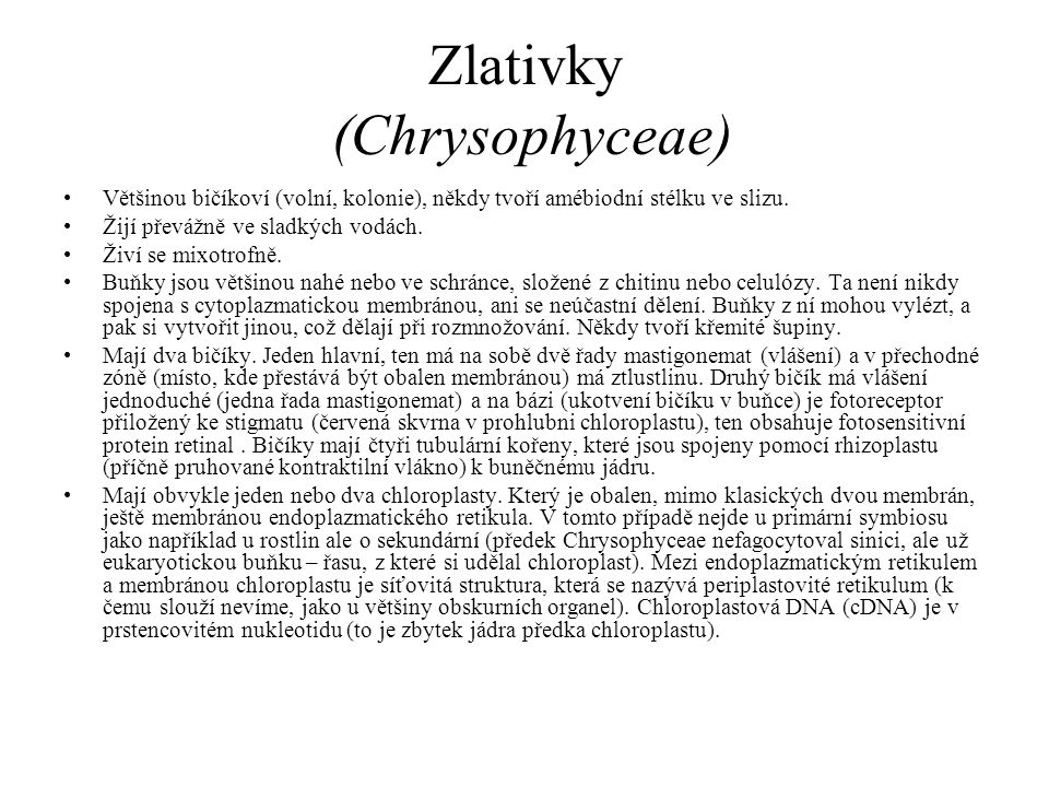 Zlativky (Chrysophyceae)