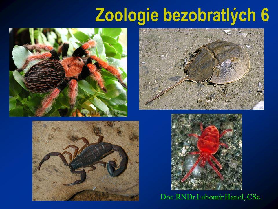 Zoologie bezobratlých 6