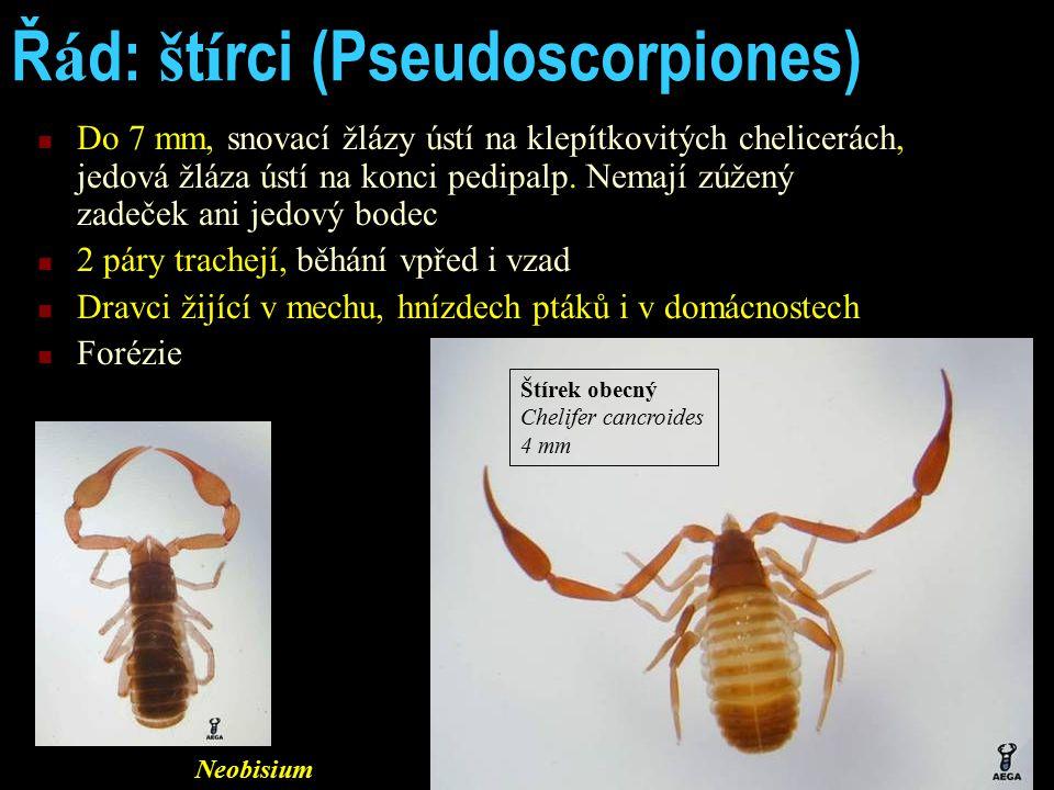 Řád: štírci (Pseudoscorpiones)