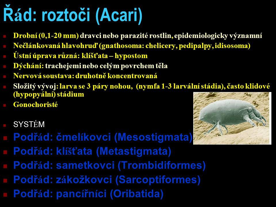 Řád: roztoči (Acari) Podřád: čmelíkovci (Mesostigmata)
