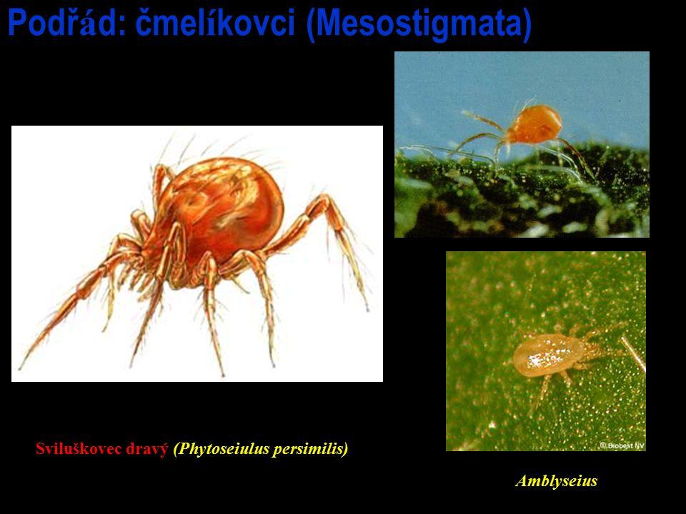 Podřád: čmelíkovci (Mesostigmata)
