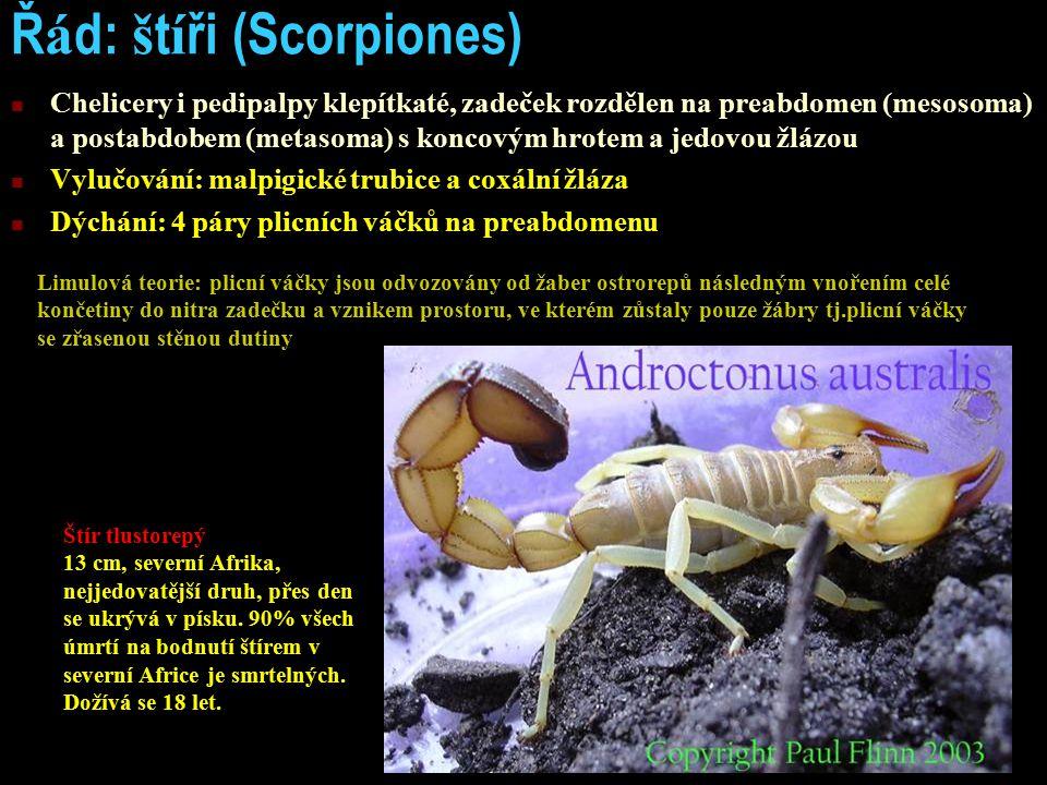 Řád: štíři (Scorpiones)