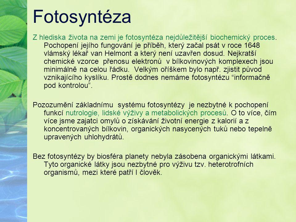 Fotosyntéza